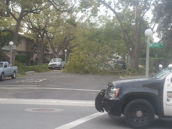 tree-down-caltech