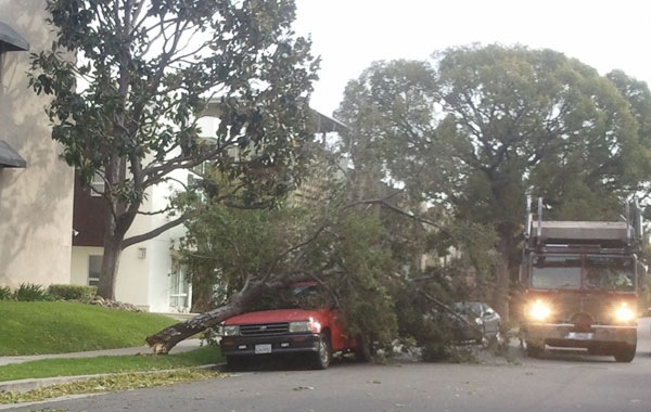 wind-storm-damage-pasadena-10