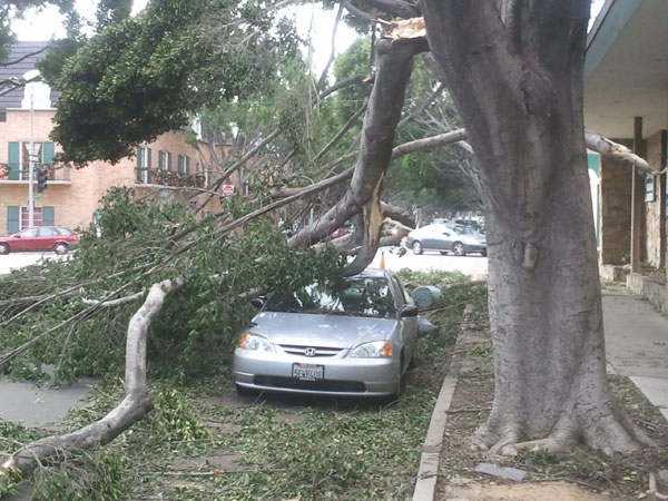 wind storm damage in pasadena