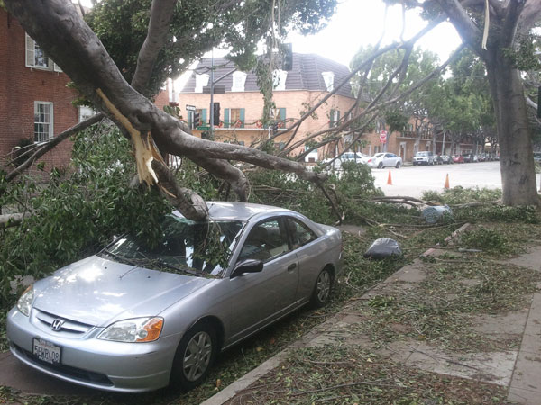 damaged car tree fallen