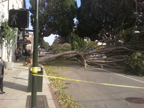 wind-storm-damage-pasadena-7