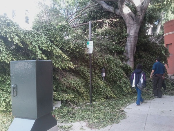 wind-storm-damage-pasadena-8